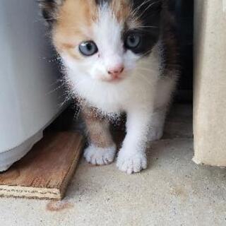里親募集 子猫、親猫