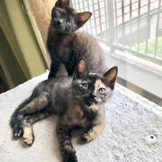 子猫二匹の里親さん募集