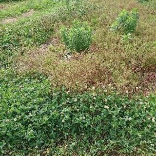 草刈り作業 ハウスクリーニング 家の片付け 墓掃除 遺品整理