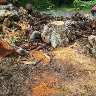 伐採木 薪  幹部のみ