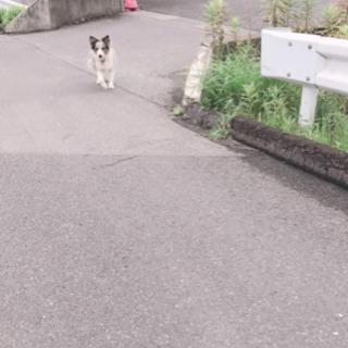 千葉市緑区付近で迷子犬