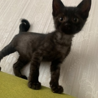 おしゃべり大好き 黒猫