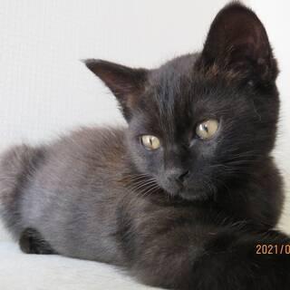 生後2ヶ月ぐらいの子猫♀