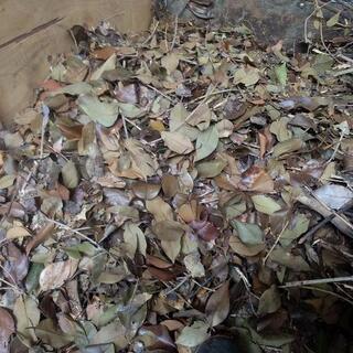 枯れ葉肥料、無農薬肥料
