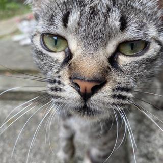 野良猫 約5ヶ月 里親募集