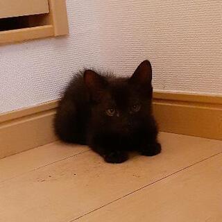 里親募集😸黒猫1匹😸