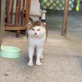 置いてきぼりの猫2匹(オス1、メス1)