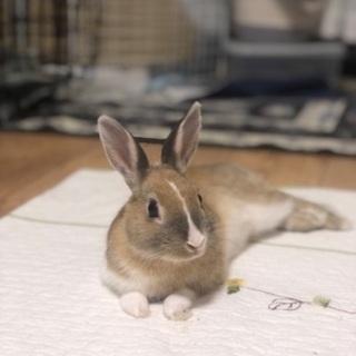 生後6ヶ月のウサギです。