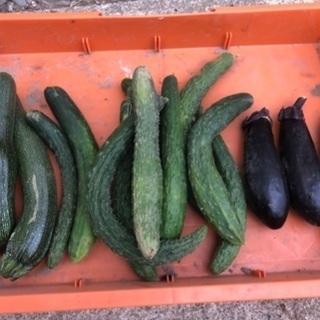 一昨日、収穫した野菜