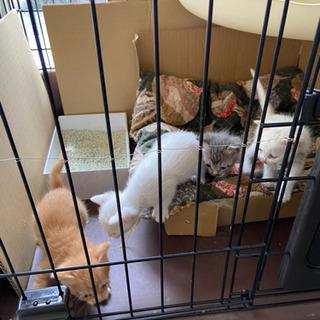 1ヶ月くらいの子猫 3匹 里親募集