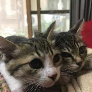 子猫2匹里親さん募集お願いします。