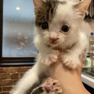 野良猫の子猫、里親さん募集します!