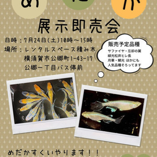 ◉イベント情報◉7月24日(土)メダカ展示即売会 in横須賀
