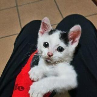 子猫の里親さん募集してます(一時停止します)