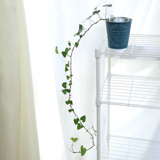 アイビーヘデラ ハートヘデラ 観葉植物i-7