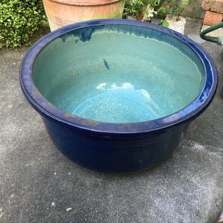 睡蓮鉢 水鉢 めだか