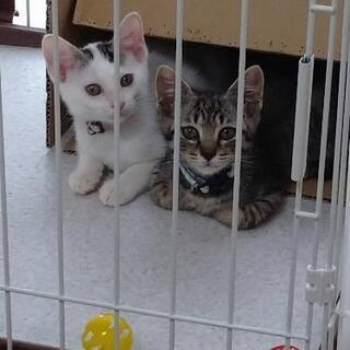 しまなみ海道 猫 美人姉妹 1.5ヵ月