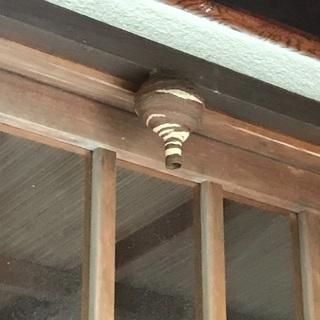 蜂の巣 駆除致します!
