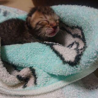 産まれたばかりの猫ちゃんです。