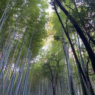 福岡佐賀県でで山を譲って頂けないでしょうか。