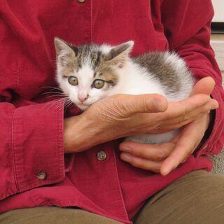 店頭で保護した仔猫の里親さんを募ります