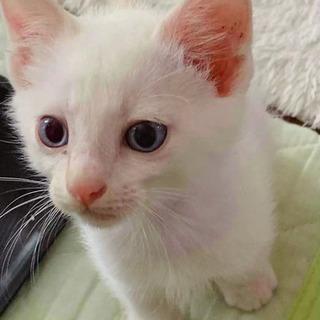 白猫ちゃん黒猫ちゃんの里親さん募集してます!!
