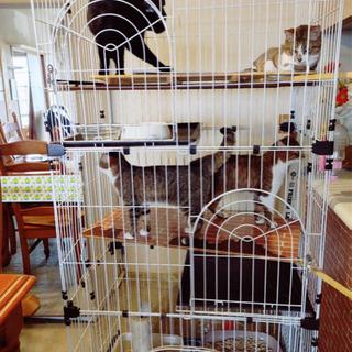 《猫2匹》里親さん募集しています!!