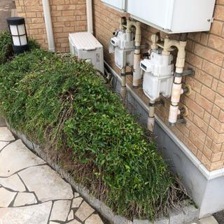 マンションやアパートの植木剪定いたします。便利屋ハートフル