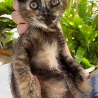 人なつっこい子猫の里親募集します/候補者の方と相談中!