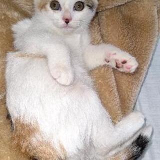 野良の子猫の里親募集 - 白山市