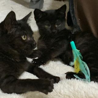 🐾3ヶ月位の黒猫ちゃん2匹兄妹です🐾