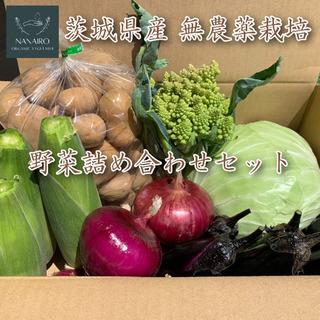 大人気 無農薬栽培 野菜詰め合わせセット(例)