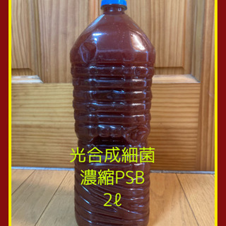 🐟数量限定 自家培養 濃縮光合成細菌PSB 2リットル