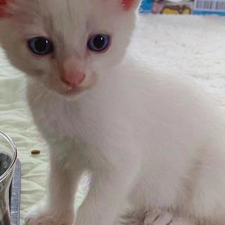 🐾白猫ちゃんの里親さん募集中です🐾