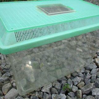 【最終処分】 USED 飼育ケース 虫かご 昆虫 夏休み