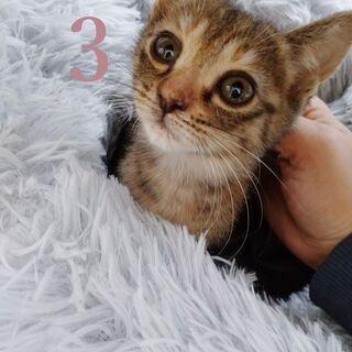 子猫4匹 里親様募集!応募停止中です。