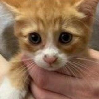 2か月の子猫の里親募集中