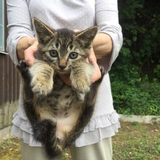 【お話し中】かわいい子猫5匹 もらってください