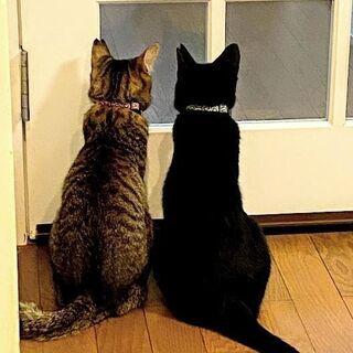 いつも仲良し 姉妹猫 1歳弱(多頭飼育崩壊からレスキュー)