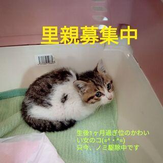 カワイイ仔猫