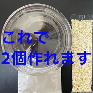 【培養簡単】マイクロワーム 培養セット メダカの針子や稚魚に【栄...