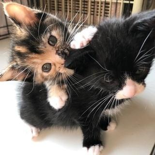 タキシード、サビ猫ちゃん2匹でお願いします!