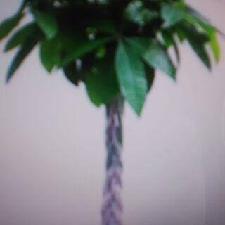 (東京)植物お引き取りサービス「大田区・品川区・目黒区・世田谷区...