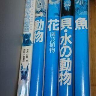 図鑑5冊【犬・動物・花・貝など・魚】