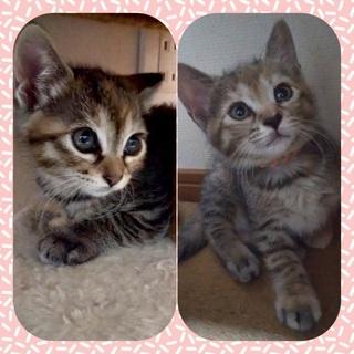 可愛さにドッキリ💕まゆちゃんひまちゃん姉妹2ヶ月