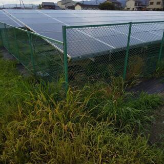 !見積もり無料!除草剤散布作業・駐車場・ソーラー(太陽光発…