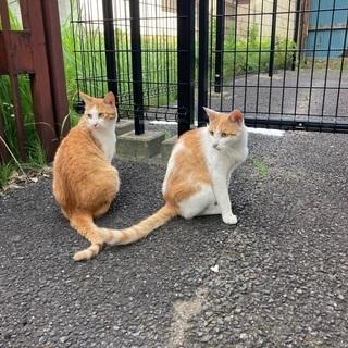 成猫、兄弟猫、野良猫、松戸