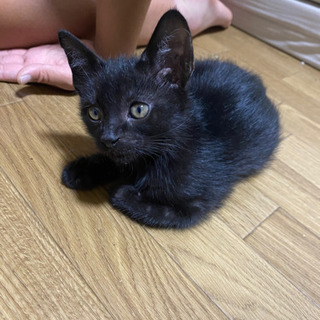 黒猫生後3ヶ月