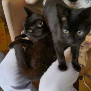 3月に生まれた黒猫の女の子 3月3日(水)生まれです☆