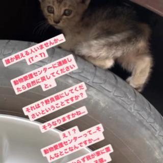 保護猫を飼える方を探しています。
